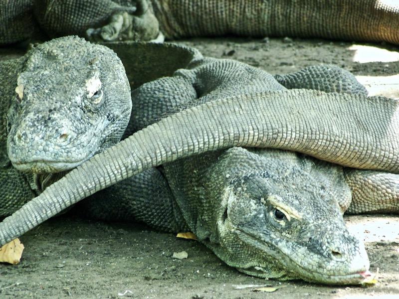 Visiting Komodo National Park