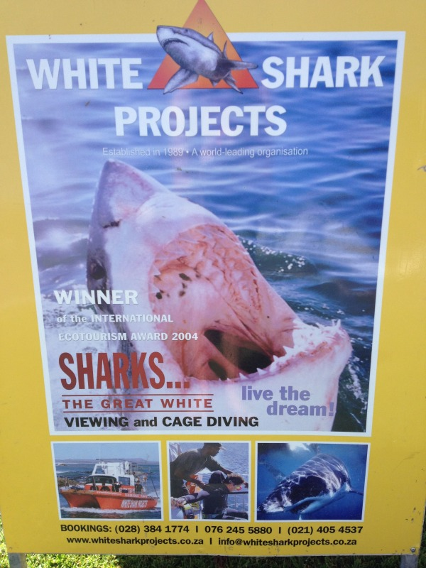 white shark projects South Africa