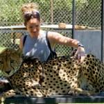 petting a leopard