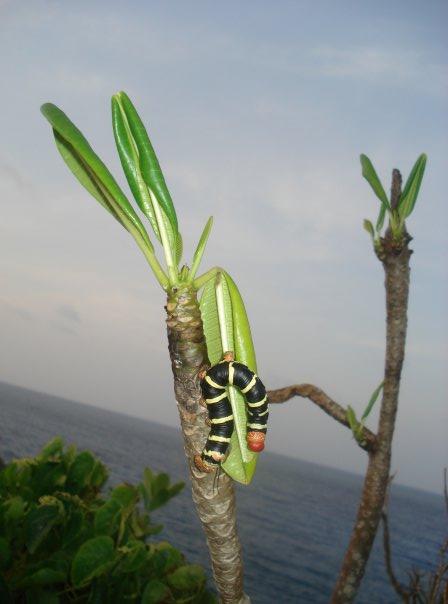A giant caterpillar