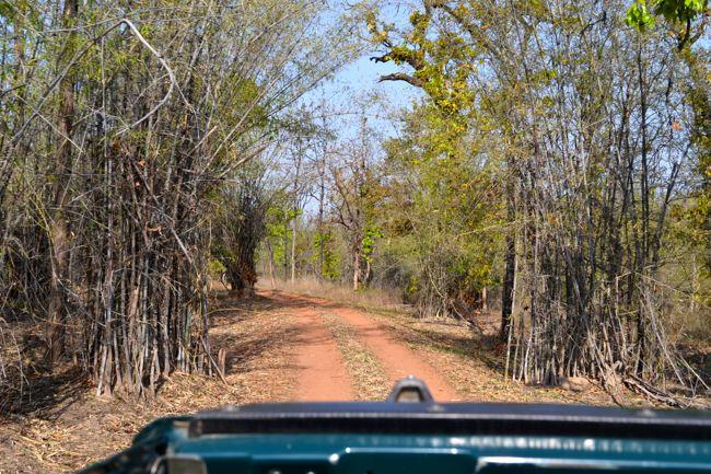 safari in Bhandhavgarh National Park