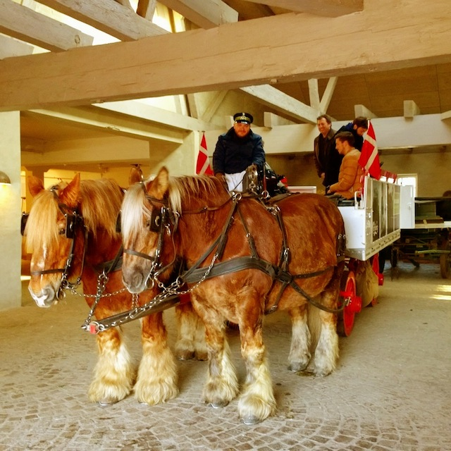 A horse ride in Copenhagen