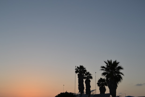 Sunset and palm trees in San Diego