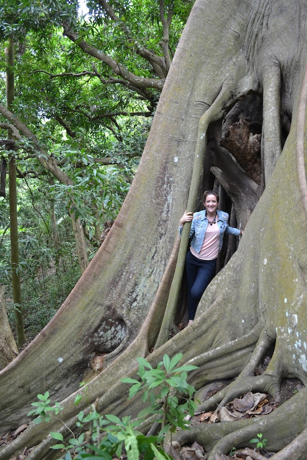 Inside the trees in St Kitts