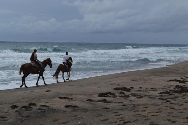 Morning horse riding along the beach