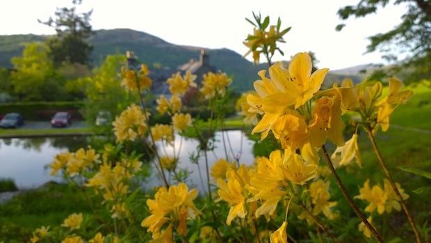Penmaenpool flowers
