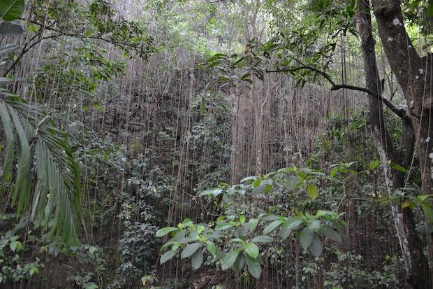 Rainforest in St Kitts