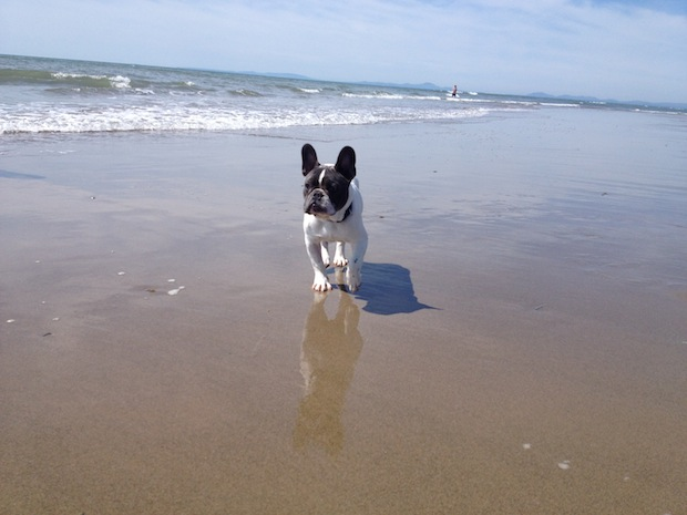 Talybont Beach with dog