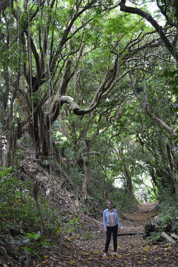 The Travel Hack Ottleys Plantation House St Kitts