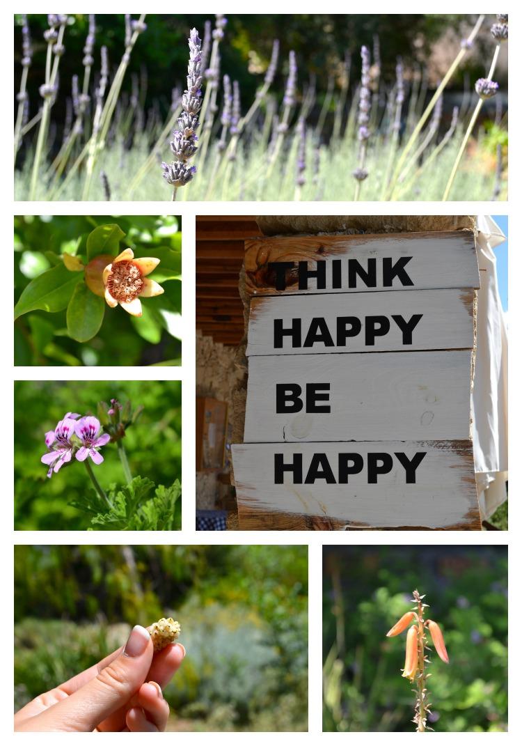Cyprus Herbal Garden.jpg