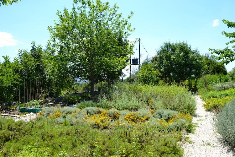 Herbal garden in Cyprus, Paphos