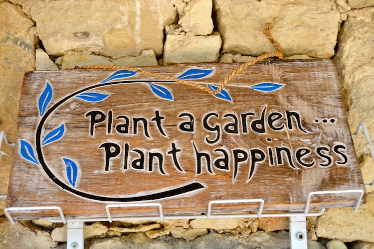 Plant a garden plant happiness