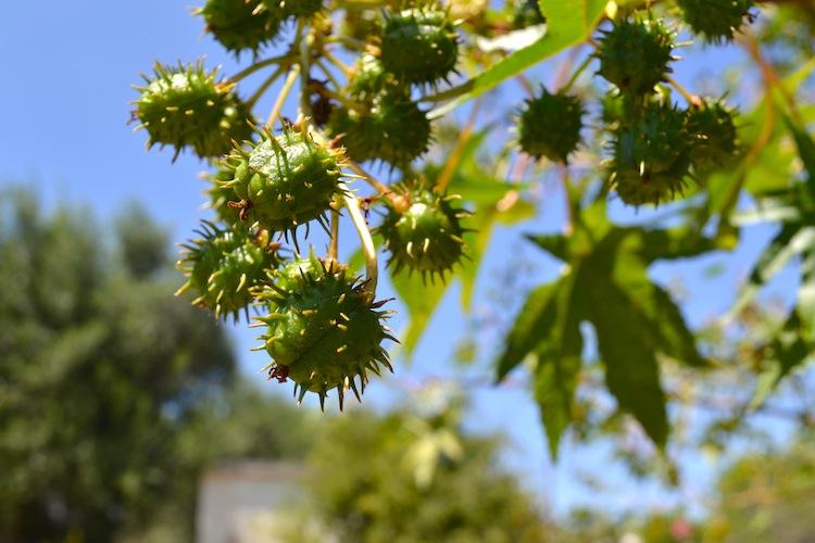 Spiky fruits