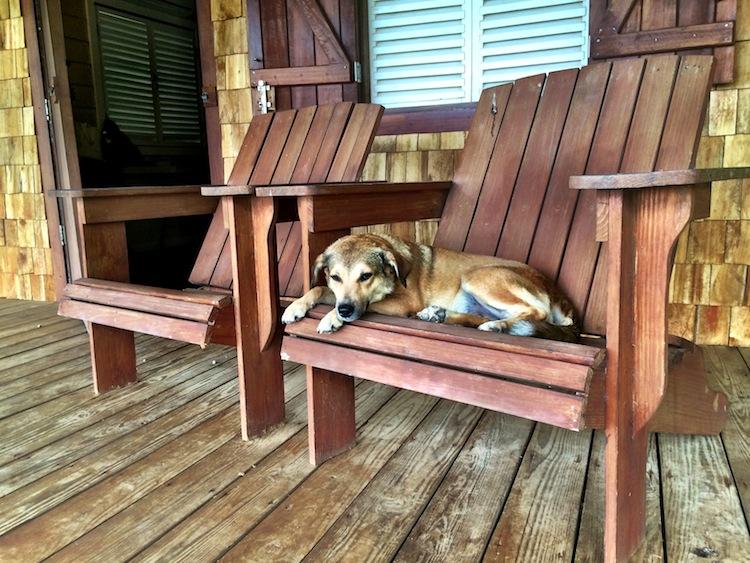 Pagua Bay House Dog