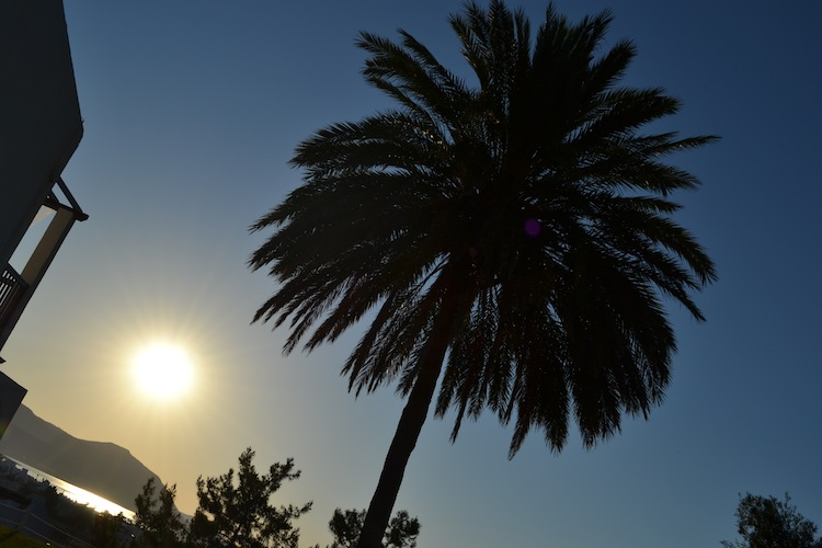 Sunset and palm trees in Cyprus