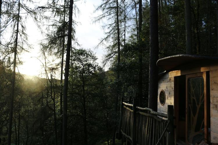 Tree house at sunrise