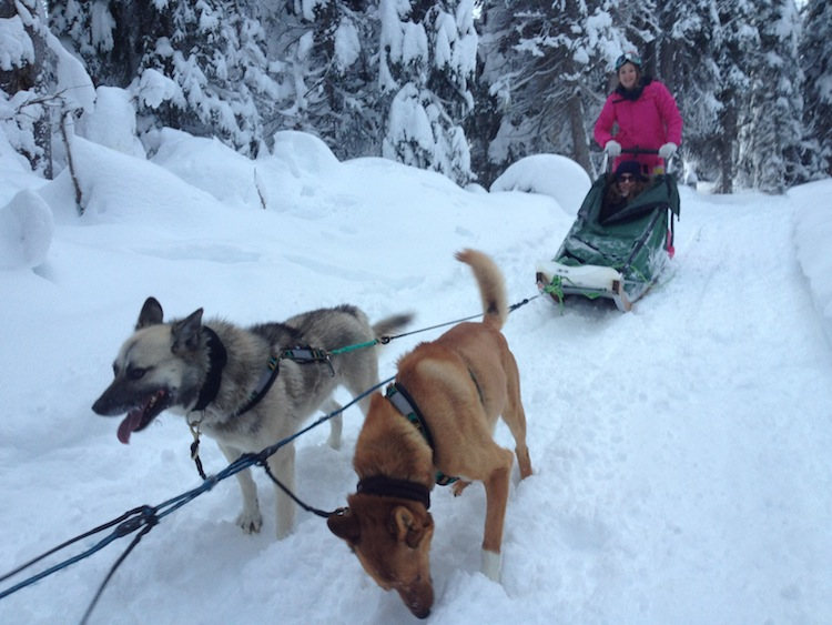 Monica Stott Dog Sledding