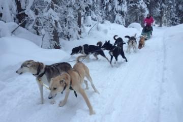 The Travel Hack Dog Sledding