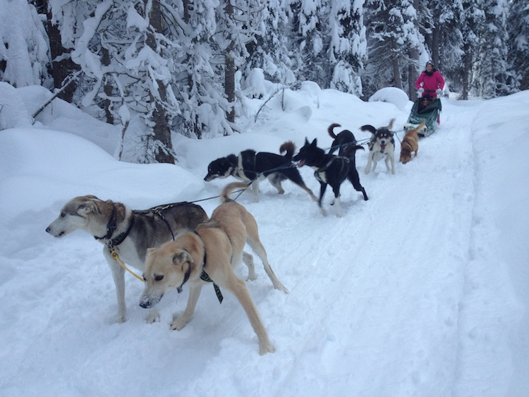 The Travel Hack Dog Sledding