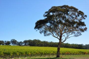 Adelaide's Wine region