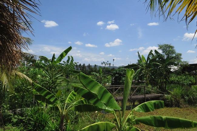 Chiang Mai rice paddies