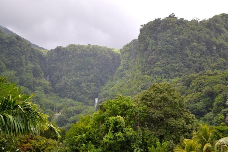 Jungle in Dominica