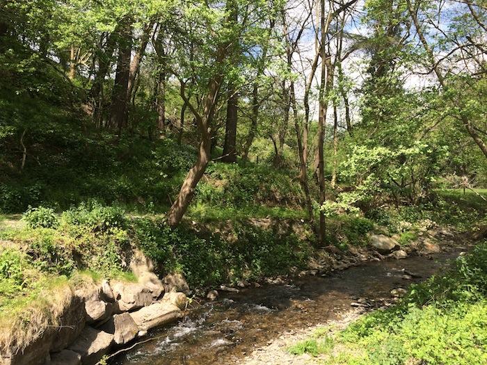 Niagra Lodge stream