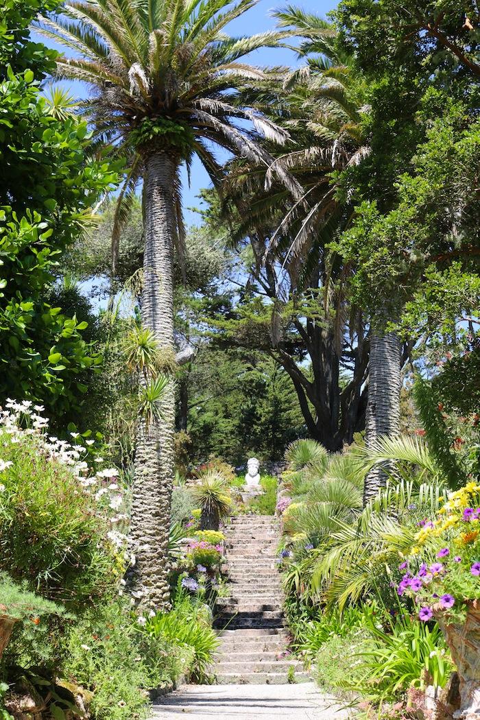 Isles of Scilly | Tresco palm trees
