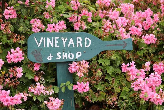 St Martin's Island Vineyard