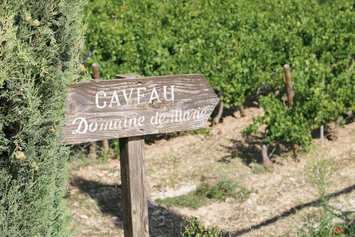 domaine de marie vineyard