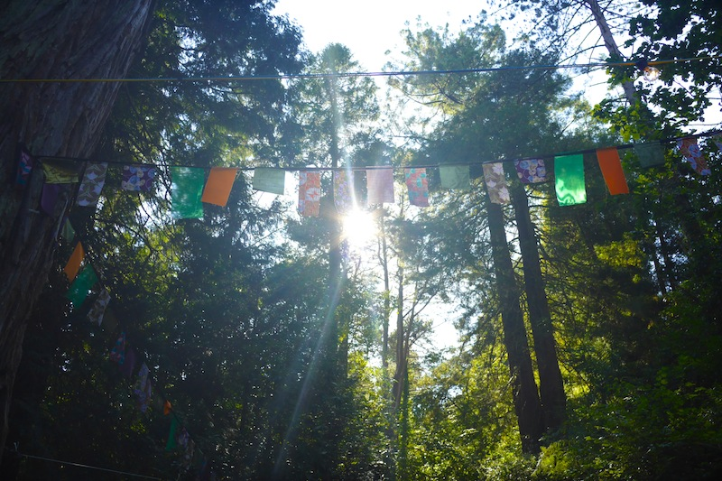 Bunting in the forest