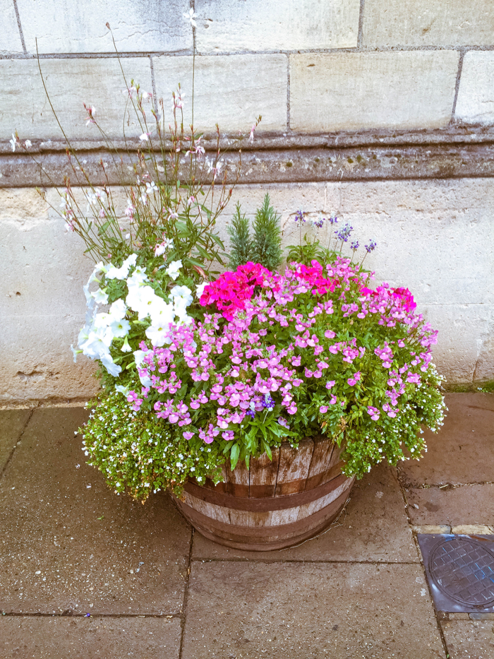 Flowers in Cirencester