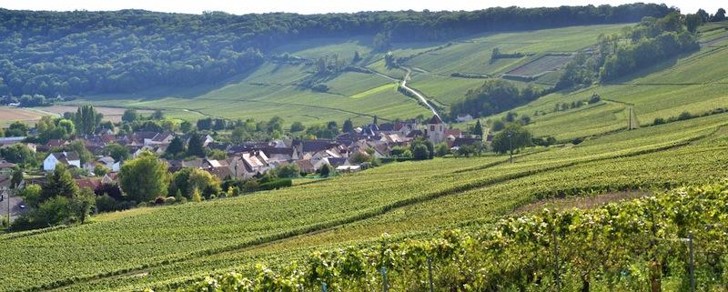 Vignobles de l'Aisne-NBryant