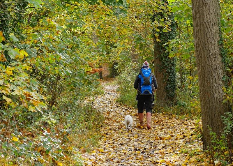 Autumn Walks