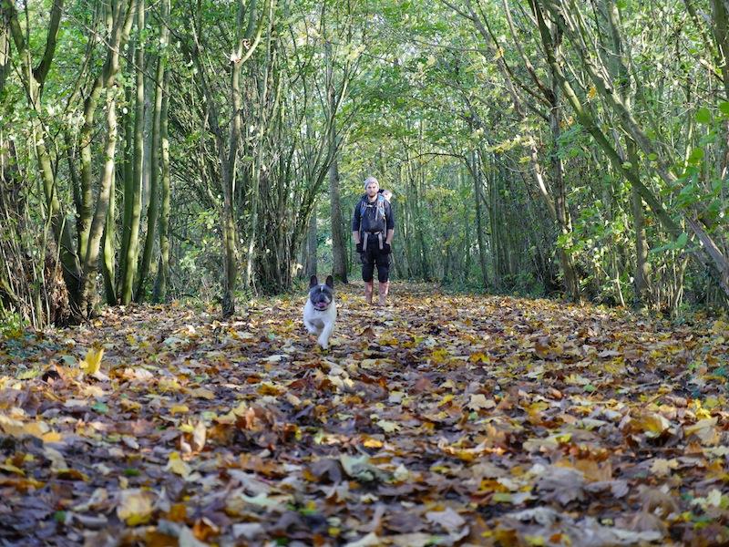 Autumn dog walks