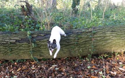 Dog jumping - taken with 4k photo