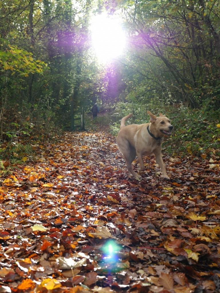 Last of the autumn sunshine