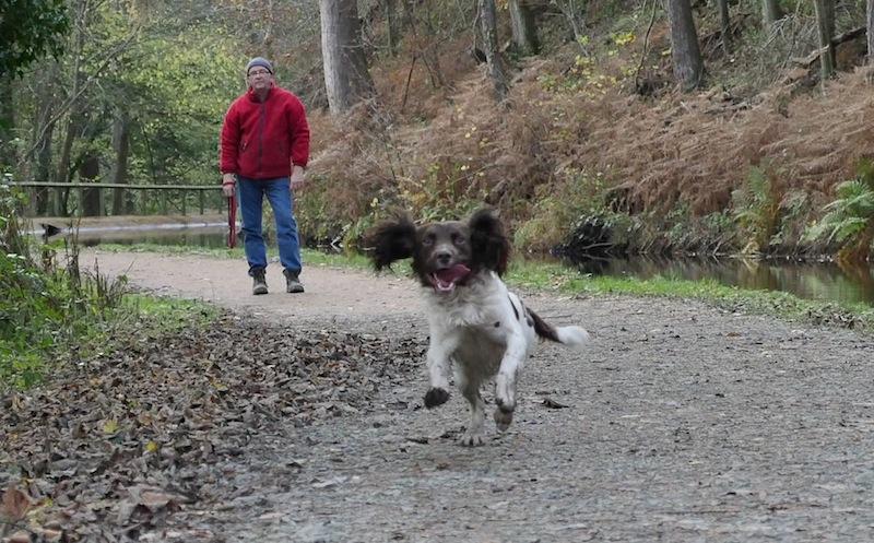 Springer running