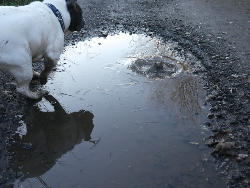 Dog splashing in icy puddle taken with #4kphoto