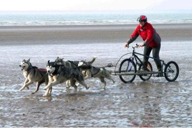 Husky Sledding in the UK