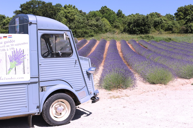 Lavender Museum and Distillery in St-Remeze Ardeche