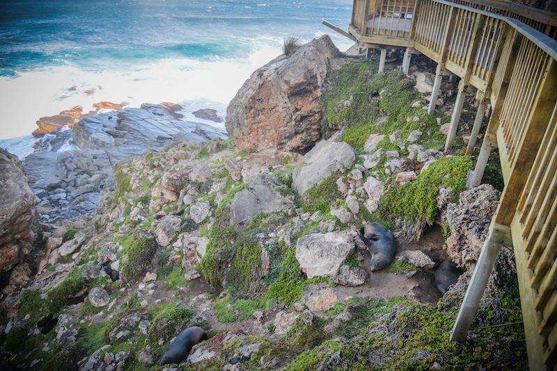 Welcome to Kangaroo Island, Australia