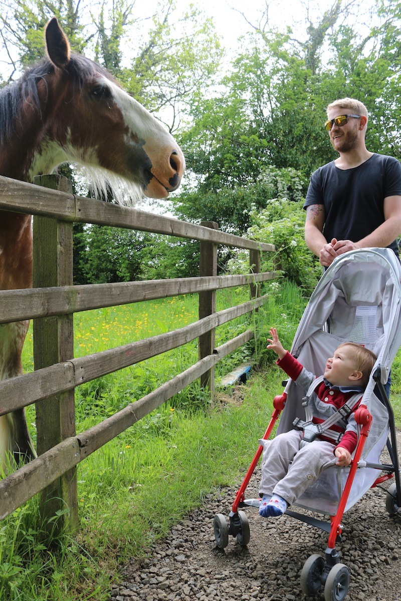 Meeting a horse at Roe Valley Country Park