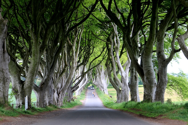 The perfect itinerary for a weekend in Northern Ireland - visit the Dark Hedges