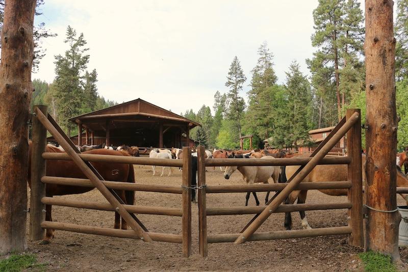 horses-at-flathead-lake-lodge
