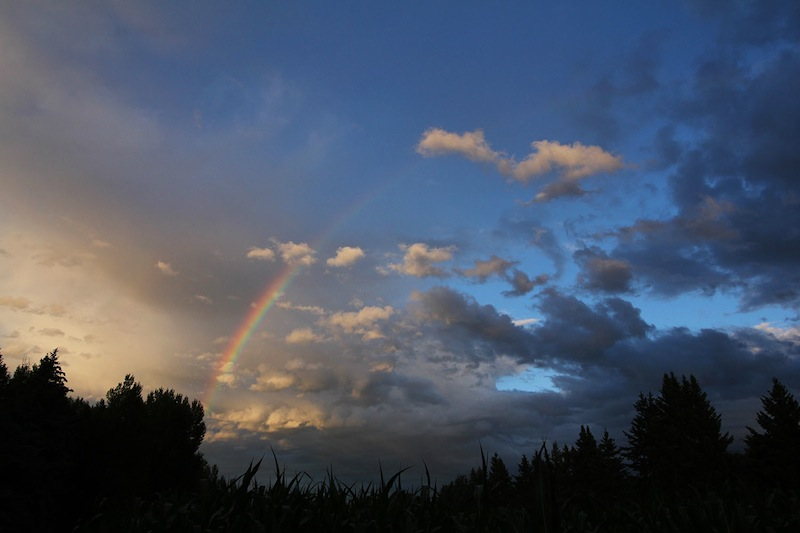 rainbow-over-cornfields