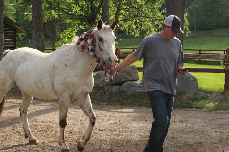 white-horse-at-flathead-lake-lodge