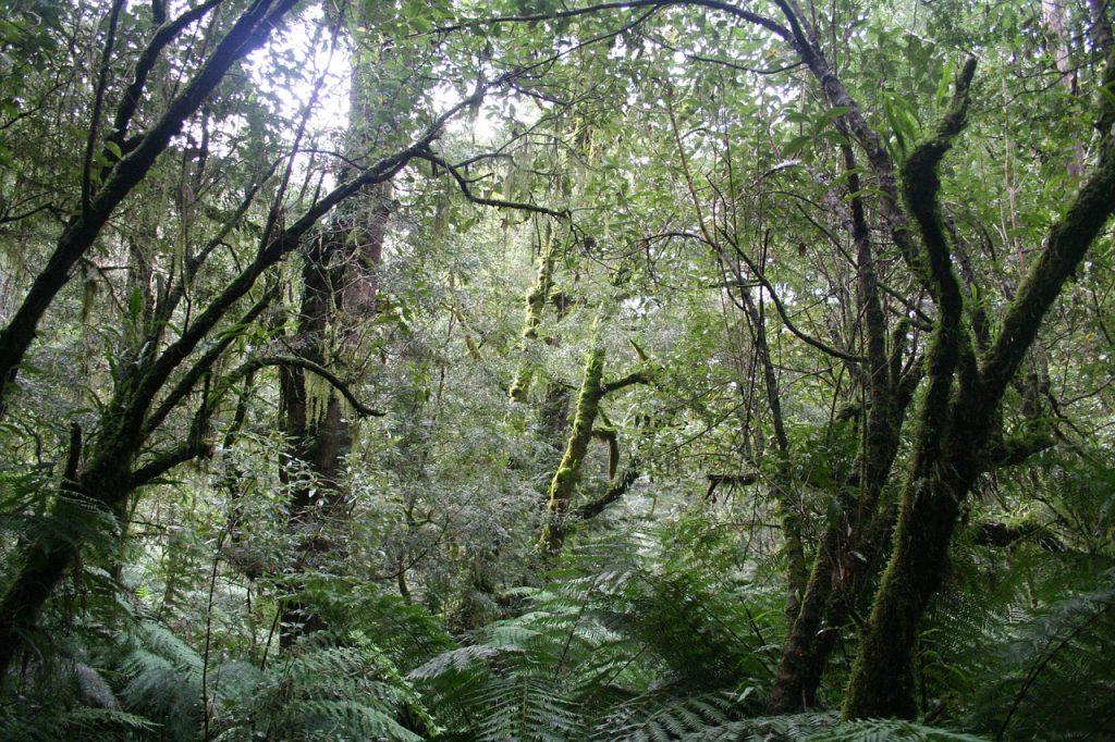 how travel surprised me - australia jungle