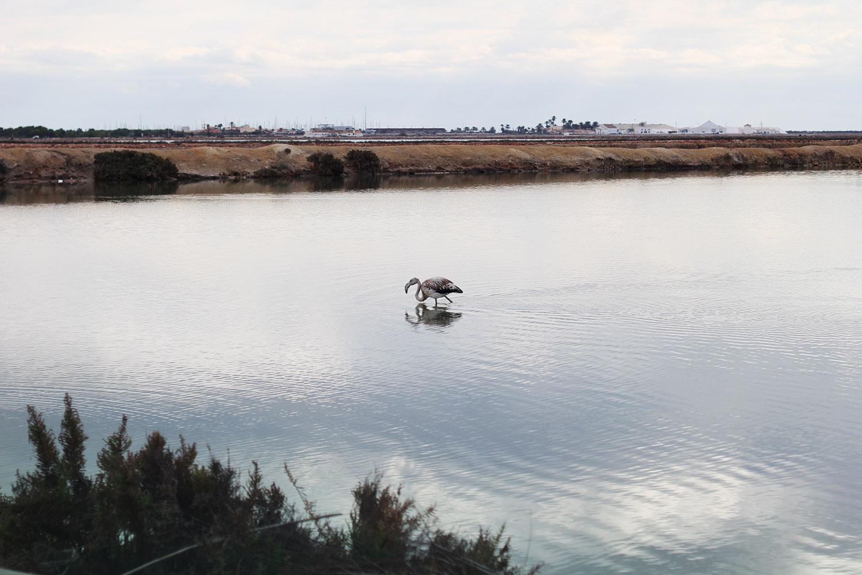 white-flamingo